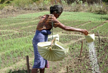 irrigating-permaculture-gardens-in-Mbore-Rote